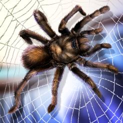 蜘蛛宠物生活模拟器
